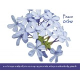 Peace Scripture Greeting Card from Israel